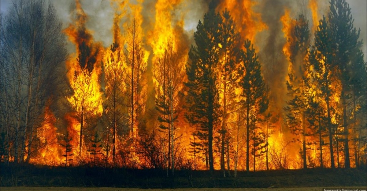 CONTROL BEFORE IT GROWS: MICROCLIMATE AND FOREST PLANTATION FIRE